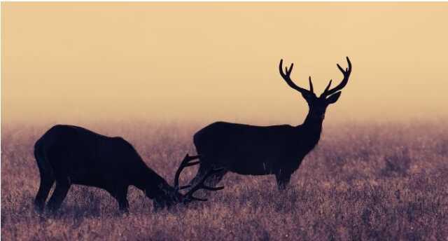 Repas de la chasse