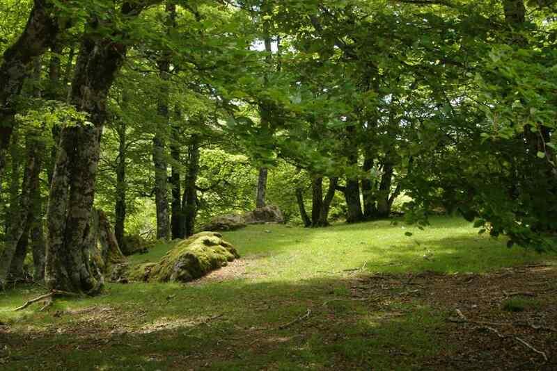 Randonnée : la forêt, un lieu à (re) découvrir