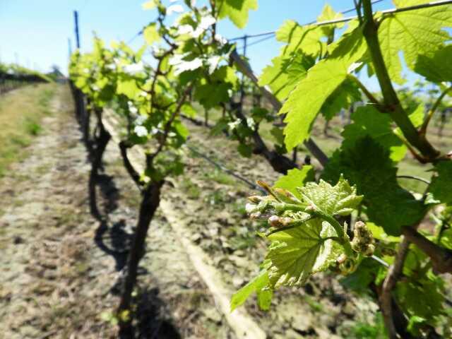 Rando des vignes