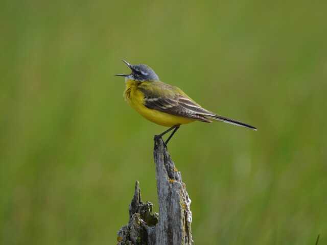 Les oiseaux du lac de la Prade