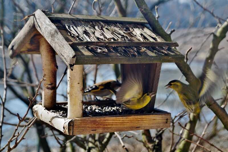 Activité « Construction d'une mangeoire à oiseau »  à Terres d'oiseaux
