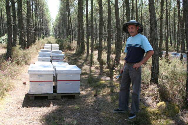 apiculteur 33770