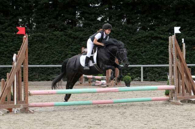 Stages de perfectionnement d'équitation