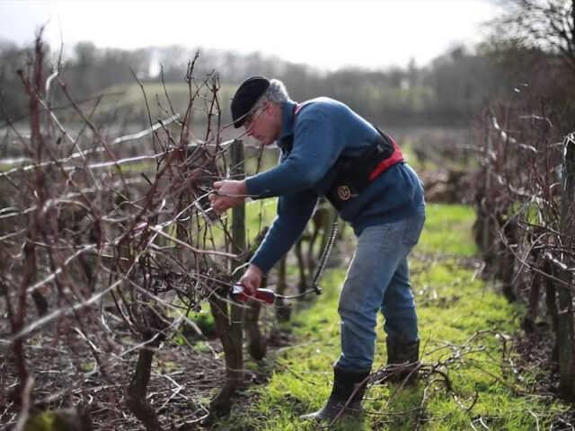 Apéritif vigneron aux Vignobles Pestoury