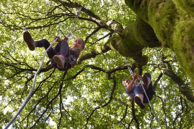 Des racines à la cime - Atelier nature pour tous à Bibracte