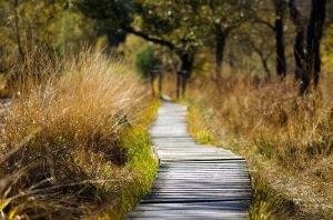 La nature des Landes   Balade nature