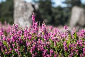 Rando Nature   Bois de Kergrist et Landes de Locarn