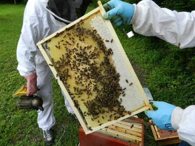 Causerie pédagogique autour des abeilles