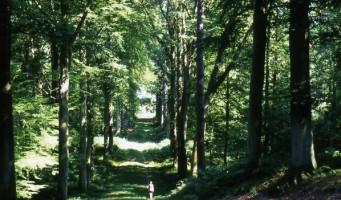 Rallye pédestre des Amis de la Forêt de Retz