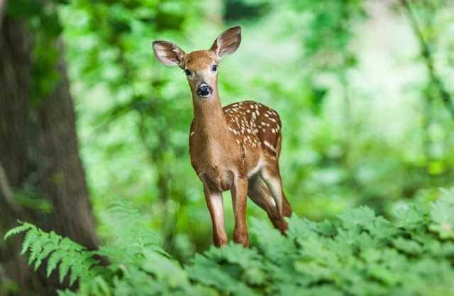 Les habitants des arbres de la forêt de Crécy 13/07/2021
