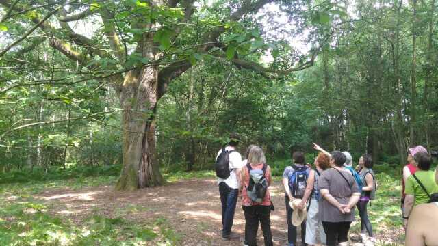 Sortie nature « Le bois des Coutumes en été »