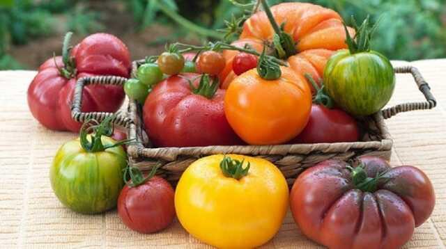 Fête de la tomate rare et ancienne